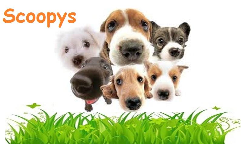 Scoopys
